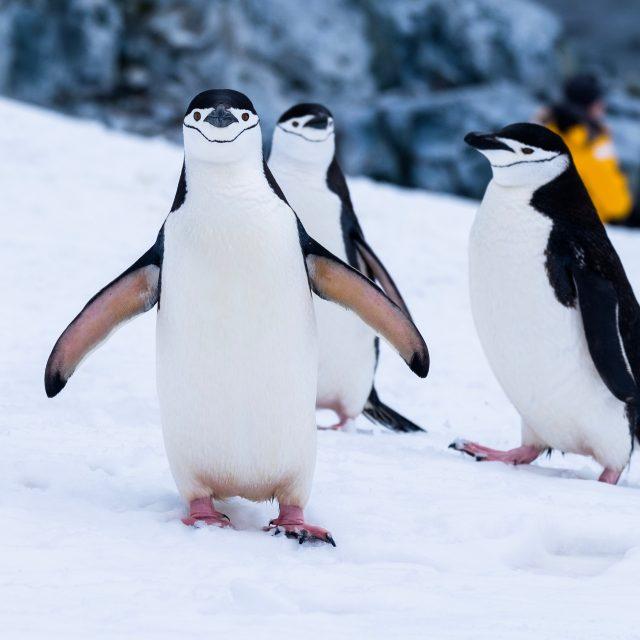 Emblematic Antarctica