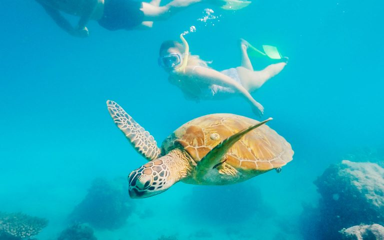 Australia-Green-Island-3-QLD-Credit-Tourism-and-Events-QLD-144602-19