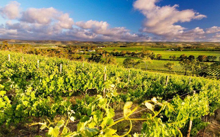 Australia,McLaren Vale, SA-credit-d'Arenberg-Winery-636673-56