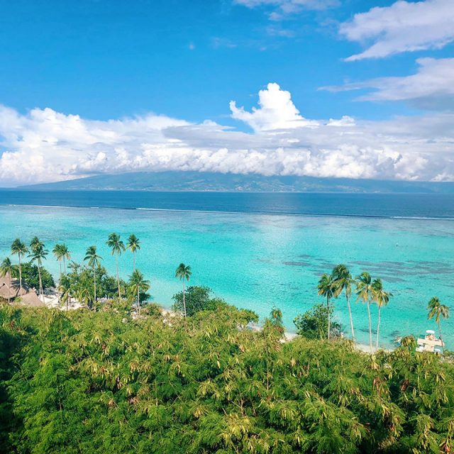 Treasures of the South Pacific