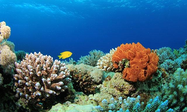 Fiji & Tonga