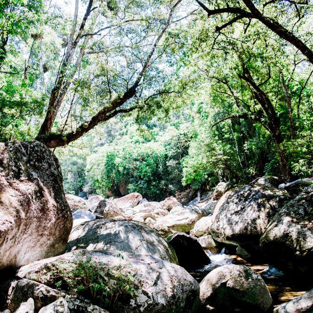 Botanical Wonders in Far North QLD