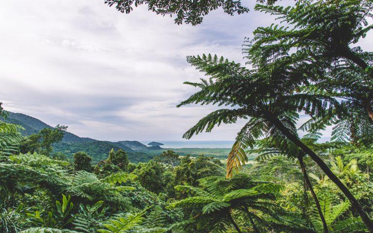 Mount Alexandra Lookout Daintree