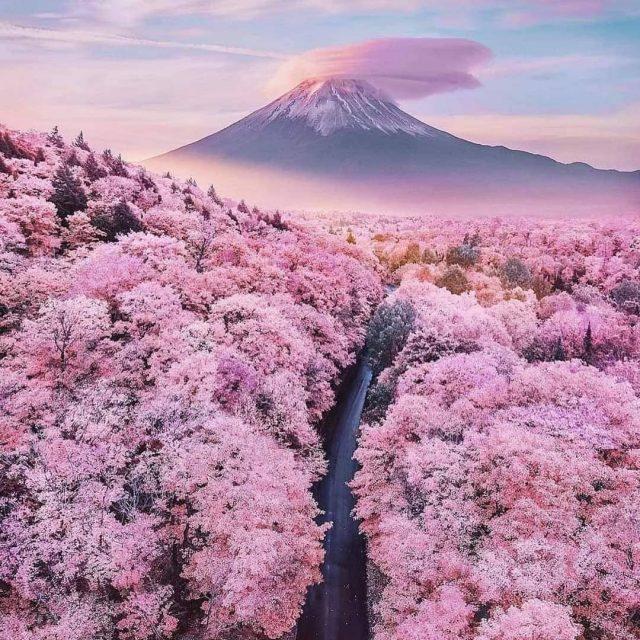 Kyushu Spring Flowers