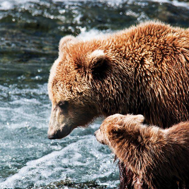 Alaska 13 Day Yukon + Triple Denali Decisions, Decisions, Decisions