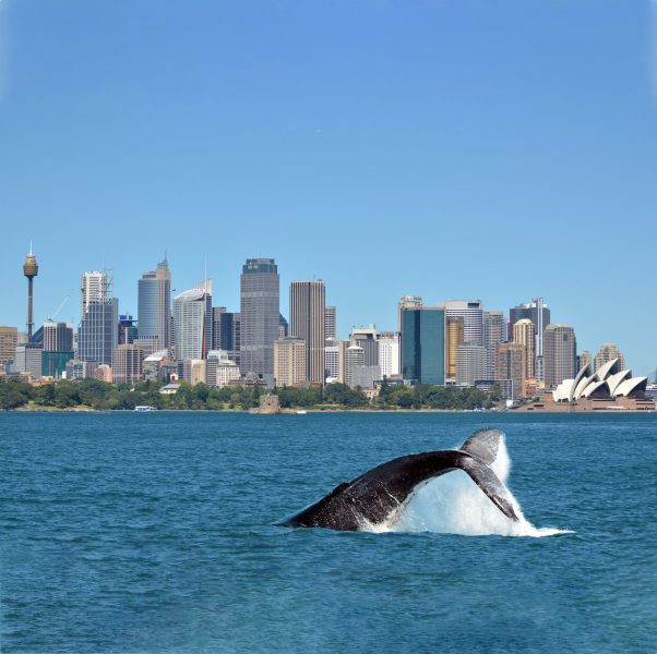 inspiring-journeys-sydney-whale-watching-HR