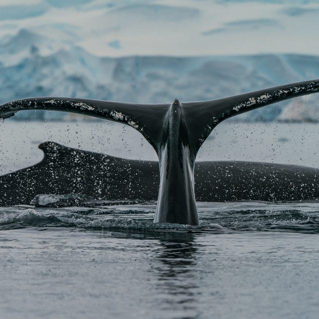 Adventures of Antarctica & Beyond